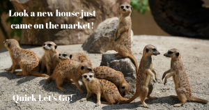 We are in a SELLER'S MARKET! This is a really BIG DEAL!